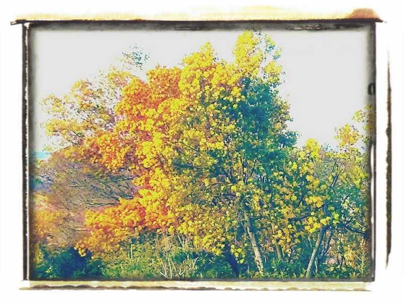 Drei Farben Gelb