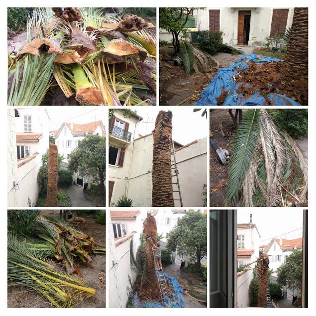 Palmensterben